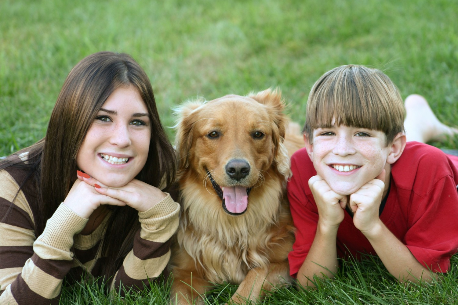 Cary Grove Animal Hospital Veterinarian in Cary Fox River Grove IL